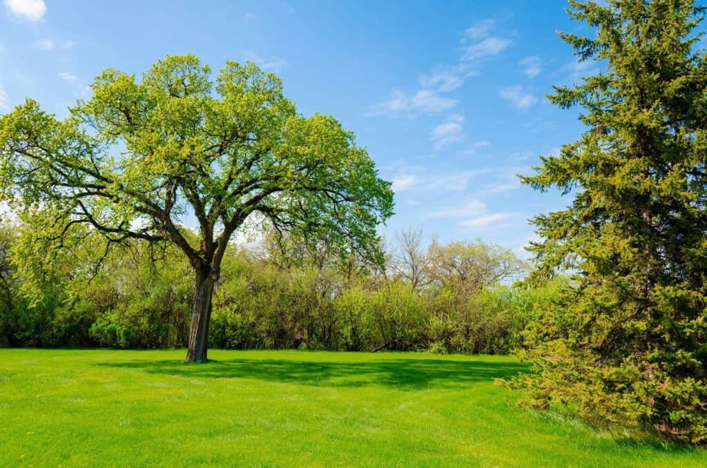 Ames Weed Control Lawn Care