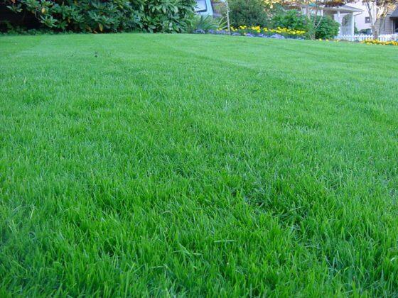 Lawn Care Near Me