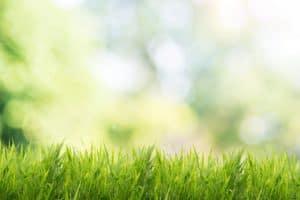 Lawn Care Fundamentals